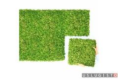 Озеленение стабилизированным мхом Москва