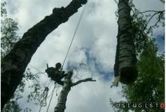 Спилить Удалить Срубить дерево в Андреевке Андреевка