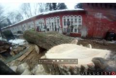 Удаление деревьев в Андреевке Зеленограде Андреевка