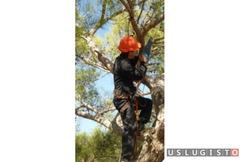 Арбористы помогут убрать деревья Андреевка