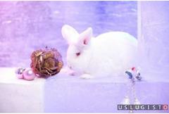 Аренда кролика для фотосессии и праздника Москва
