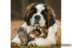 Передержка животных кошек собак Москва