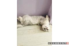 Передержка котов и кошек на дому Москва