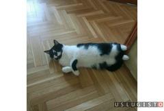 Вязка кошки Москва