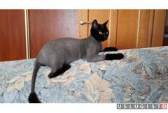 Профессиональная стрижка кошек Москва
