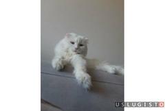 Передержка кошки Москва